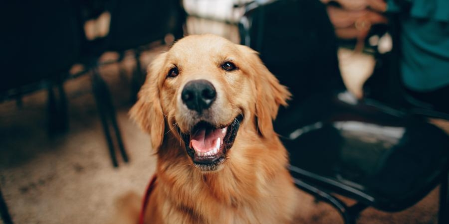 Authentic & Reliable Pet Guides for Pet Lovers